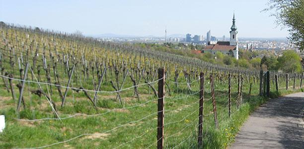 vienna - the city of wine