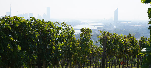 Hiking through Vienna's vineyards – Wiener Weinwandertag on the first weekend of October